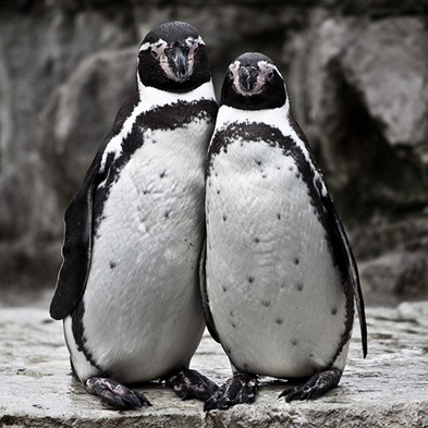 couple animaux